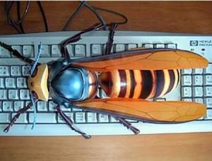 giant-hornet-300x228