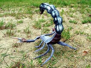 scorpion-300x225